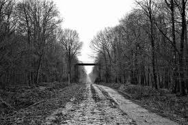 Foresta di Arenberg, Parigi-Roubaix
